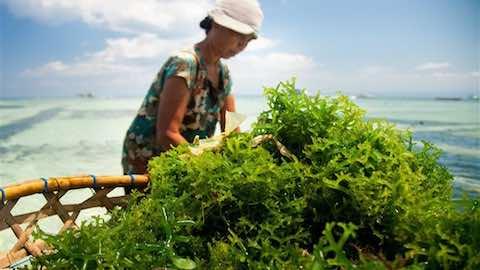 Is seaweed the next super food?