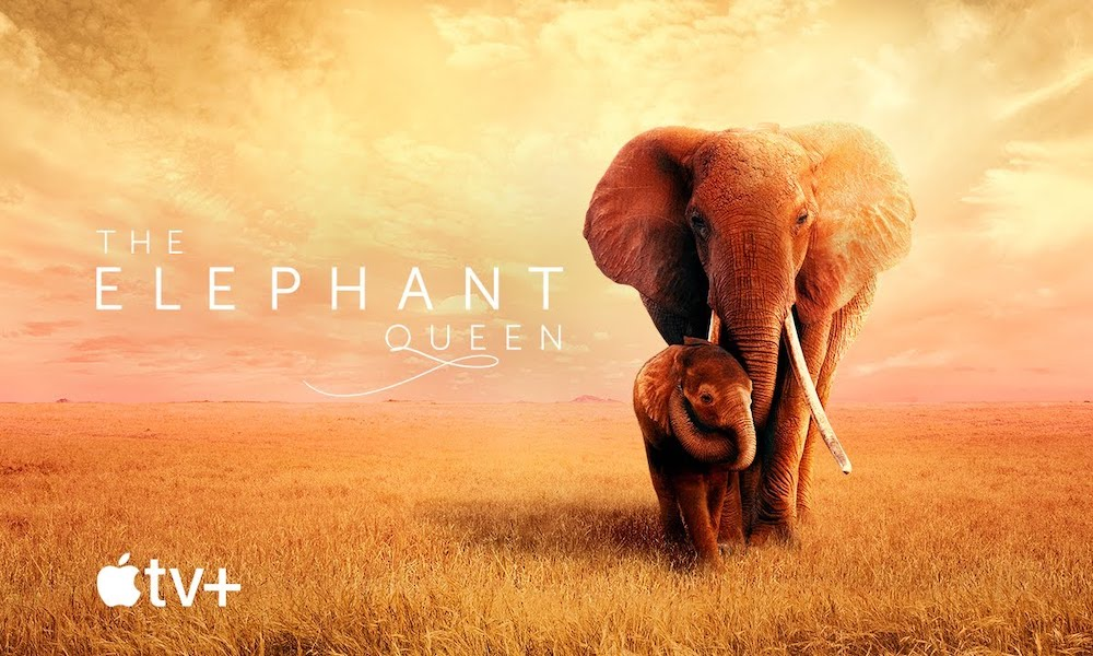 Apple Shares Trailer for 'The Elephant Queen', Coming to Theatres on Oct. 18, Apple TV+ on Nov. 1