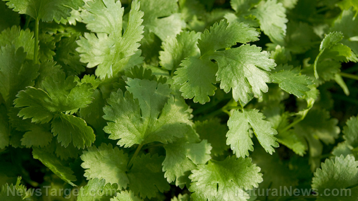 Molecular mechanism explained: How cilantro helps delay seizures common in epilepsy and other neurological disorders